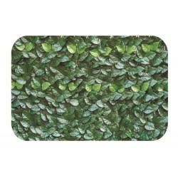 Siepe Verde lauro - VERDELOOK